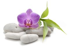 Zen basalt stones ,orchid and bamboo. Isolated on white royalty free stock photography