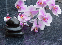 Zen basalt stones and orchid Royalty Free Stock Photo