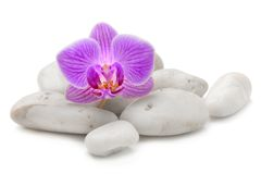 Zen basalt stones and pink orchid Royalty Free Stock Images