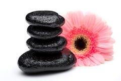 Zen bazalta kamienie i stokrotka odizolowywający na bielu Zdjęcie Stock