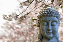 Zen Buddha, der unter Kirschblüten-Bäumen meditiert Stockfotografie