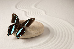 Zen butterfly Royalty Free Stock Photography