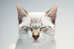 Zen cat Stock Images