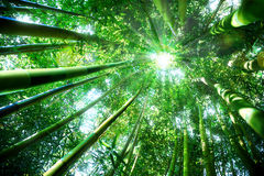 Zen concept in nature. Green bamboo forest - zen concept stock photo