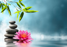 Zen concept in nature Royalty Free Stock Images