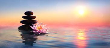 Zen Concept - Spa Stones And Waterlily. In Lake At Sunset royalty free stock images