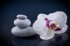 zen concept stones and orchid Royalty Free Stock Photos