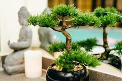 Zen concept. View at te spa wellness zen concept royalty free stock image