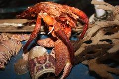 Zen Crab royalty-vrije stock fotografie