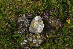 Zen created by nature. Created by nature composition of stones and flowers in the mountain tundra royalty free stock images