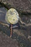 Zen del agua de la hoja Imagen de archivo libre de regalías