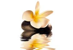 Zen del fiore Fotografia Stock