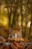 Zen del gatto Immagini Stock