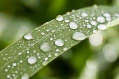 Zen della natura Fotografie Stock Libere da Diritti