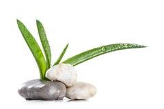 Zen delle foglie e delle pietre dell'aloe Immagine Stock
