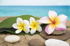 Zen en kuuroordconcept op het strand Stock Fotografie