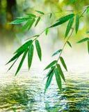 zen för bambuleafande Royaltyfri Foto