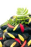 zen för yellow för sten för svarta ferngreenpetals röd Arkivfoto