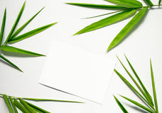 Zen flat lay with green leaf and white paper. Bamboo leaf floral arrangement on white background. Royalty Free Stock Photography