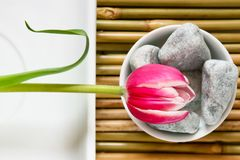 Zen flower Stock Photos