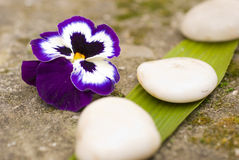 Zen flower and stones Stock Image