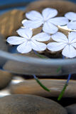 Zen flowers Stock Images
