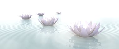 Zen Flowers on water in widescreen vector illustration