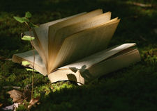 Zen Forest. A summer sunset warm light in the forest and a book, the perfect recipe for interior peace and zen spirit Royalty Free Stock Photography