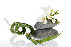 Zen freesia bamboo. White freesia resting on a stone with bamboo stock image