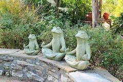 Zen Frogs Immagine Stock