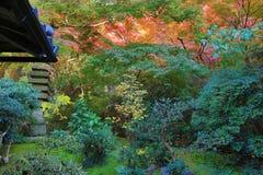 Zen garden at fall season at japan at Rurikoin Royalty Free Stock Photography