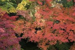 Zen garden at fall season at japan at Rurikoin Royalty Free Stock Photos