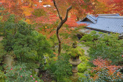 Zen garden at fall season at japan at Rurikoin Royalty Free Stock Images