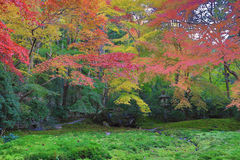 Zen garden at fall season at japan at Rurikoin Royalty Free Stock Photo