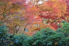 Zen garden at fall season at japan at Rurikoin Stock Photo