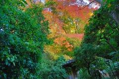 Zen garden at fall season at japan at Rurikoin Stock Photography