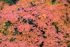 Zen garden at fall season at japan at Rurikoin Royalty Free Stock Image