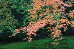 Zen garden at fall season at japan at Rurikoin. A zen garden at fall season at japan at Rurikoin Stock Photos