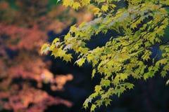 Zen garden at fall season at japan at Rurikoin. A zen garden at fall season at japan at Rurikoin Royalty Free Stock Photography