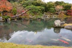 Autumn garden at Tenryu-ji, Arashiyama. Zen garden and fish in pond of Tenryu-ji temple with beautiful autumn foliage colorful leaf at fall seaon, Arashiyama Stock Photo