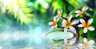 Zen garden with frangipani. And vapour on water royalty free stock photos