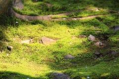 Zen garden at japan Stock Image