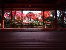 Zen Garden, Japanese Garden, Myoshinji Temple Kyoto. Autumn leaves in Kyoto, Myoshinji Temple Kyoto, Japanese autumn foliage in Kyoto Royalty Free Stock Image