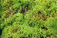 Zen garden moss Royalty Free Stock Photo