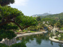 Zen garden pool park in the city Royalty Free Stock Photo