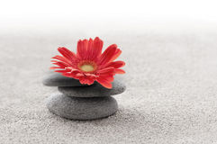 Zen garden with red gerbera flower Royalty Free Stock Image