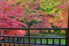 Zen garden at Rurikoin, all viewed through a window. A zen garden at fall season at japan at Rurikoin Royalty Free Stock Photography