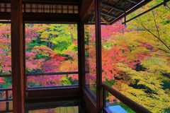 Zen garden at Rurikoin, all viewed through a window. A zen garden at fall season at japan at Rurikoin Stock Photography