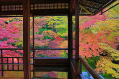Zen garden at Rurikoin, all viewed through a window. A zen garden at fall season at japan at Rurikoin Stock Images