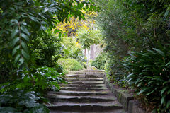Zen. Garden walkway with green foliage and stairway facing upward Royalty Free Stock Photography